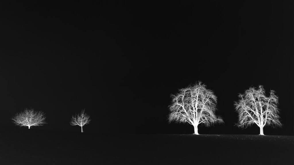 Winterbäume im Nebel - Negativ Effekt
