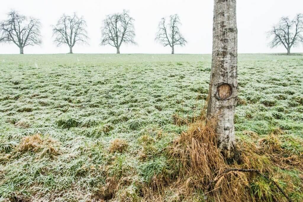 Workshop Bildgestaltung - Wintereinbruch