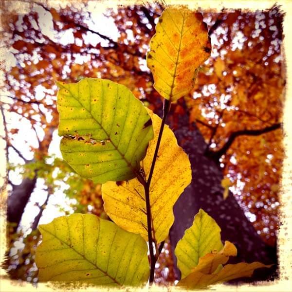 Herbstblätter Farbenpracht