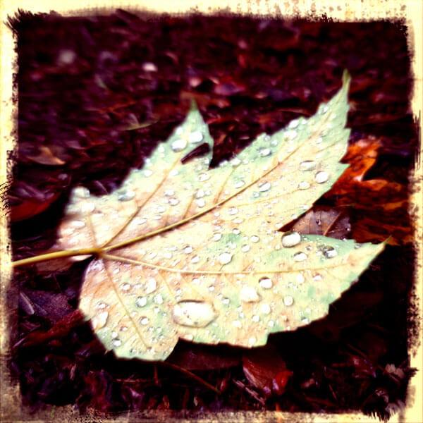 Herbstblatt bei Regenwetter