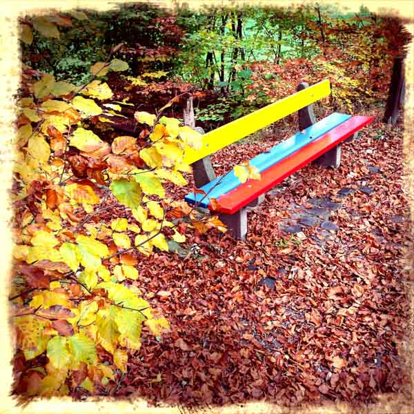 Parkbank mitten in den Herbstfarben