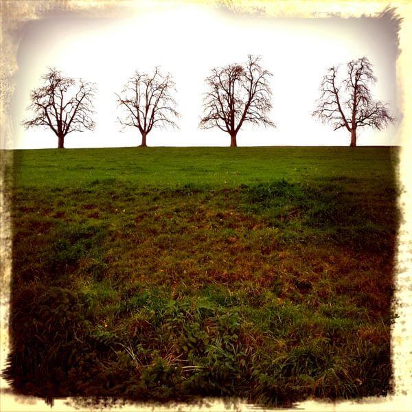 vier Baumsilhouetten an Herbstabend