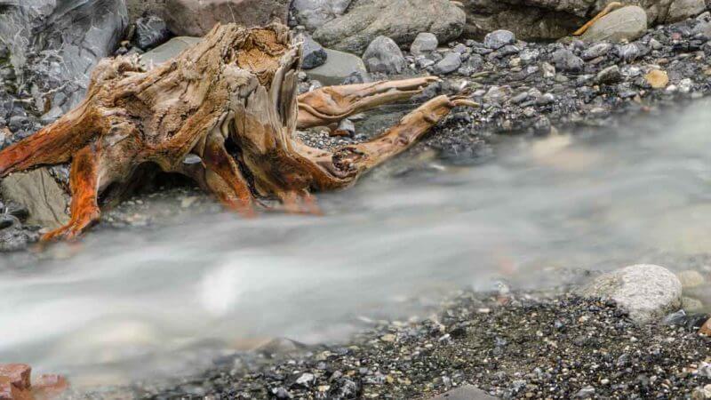 Wurzel an Bachufer in Bergün