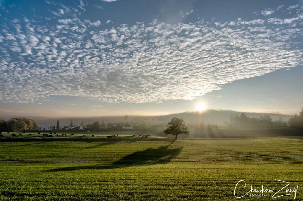 Bäume fotografieren - Schloss Watt 2