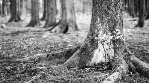 Waldmotiv mit grosser Blende f/1.8