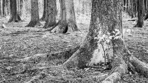Waldmotiv mit kleiner Blende f/16