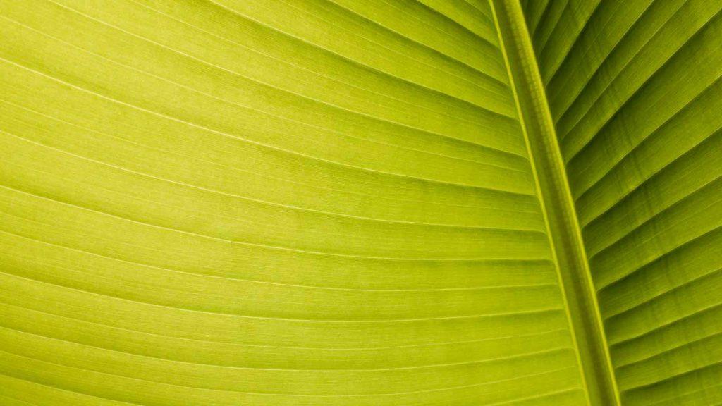 abstrakte Fotomotive - Palmblatt im Gegenlicht