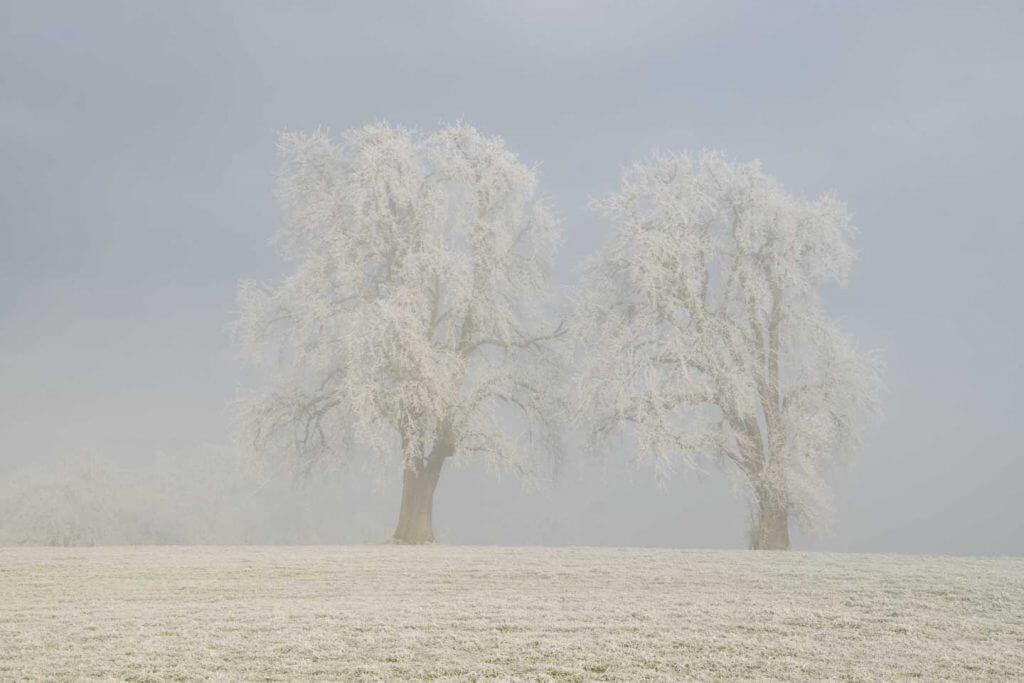 An der Nebelgrenze fotografieren