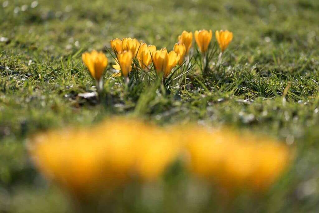 Schärfe einmal anders gesetzt - Wann blüht welche Blume