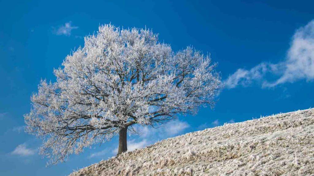 Raureif an Baum und blauer Himmel