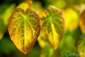 Blätterpracht im Morgenlicht