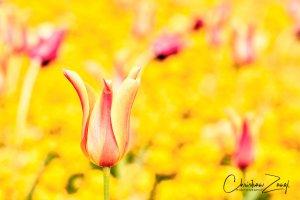 Frühlingsbilder und Frühlingsfarben