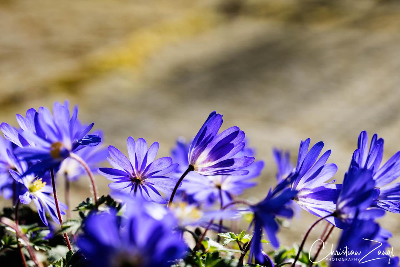 Frühlingsbilder und Frühlingsfotos - blaue Akzente