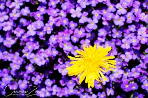 Frühlingsfotos - Farbkontraste