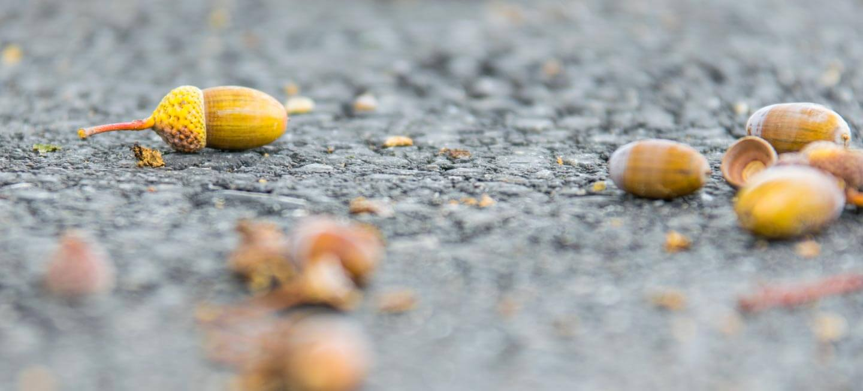 Herbstfrüchte am Boden