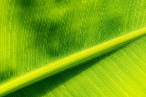 RGB-Histogramm Palmblatt beschnitten