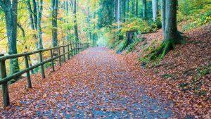 Waldweg auf Dreiweihern St Gallen