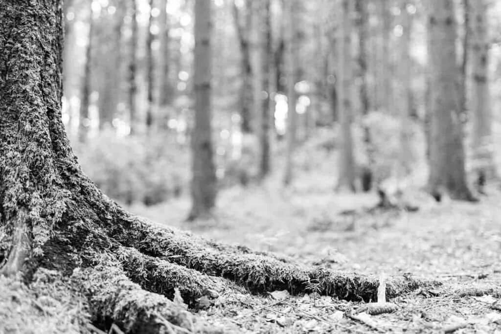 Wurzeln im Wald - Mit einem 35mm Objektiv fotografieren
