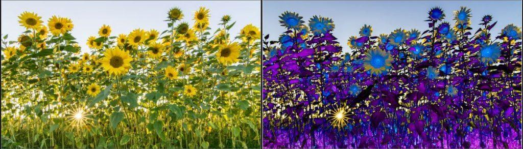Bild links ohne und rechts mit Solarisation