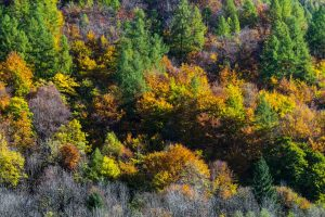 farbiger Herbstwald im Maggiatal