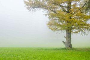 warme Herbstfarben im Nebel
