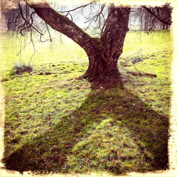Baumgabelung mit Schatten
