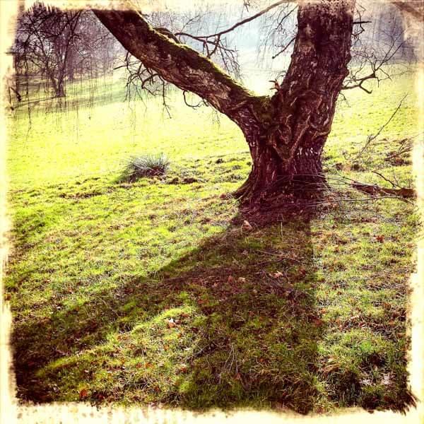 Baumgabelung mit Schattenwurf