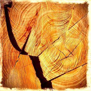 Schnittfläche an Baumstamm