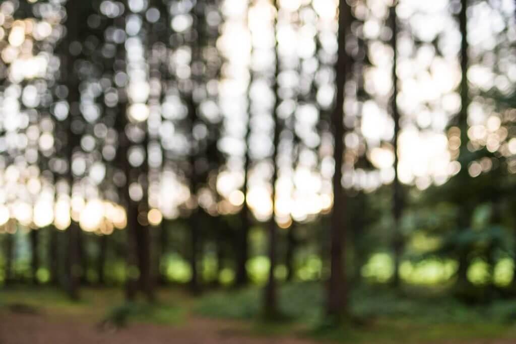 Wald im Hudelmoos in Unschärfe