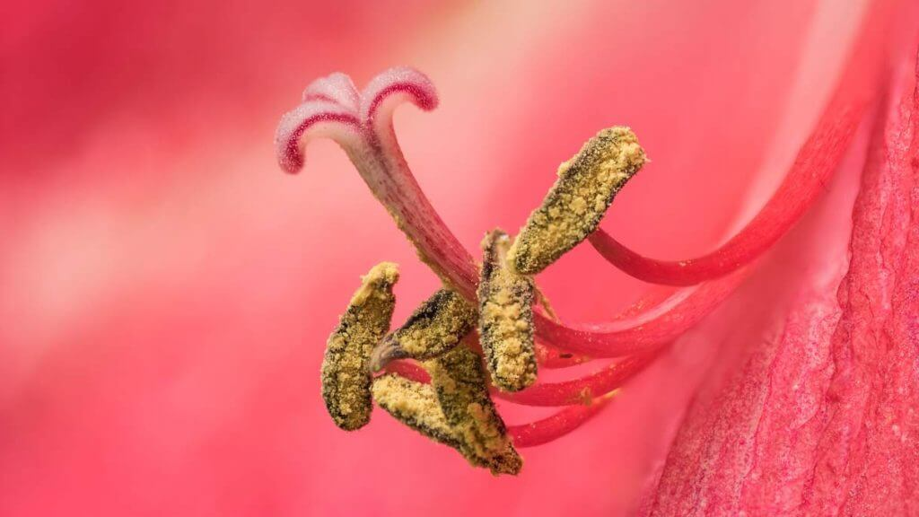 Blütenstengel Makrofotografie HeliconFocus