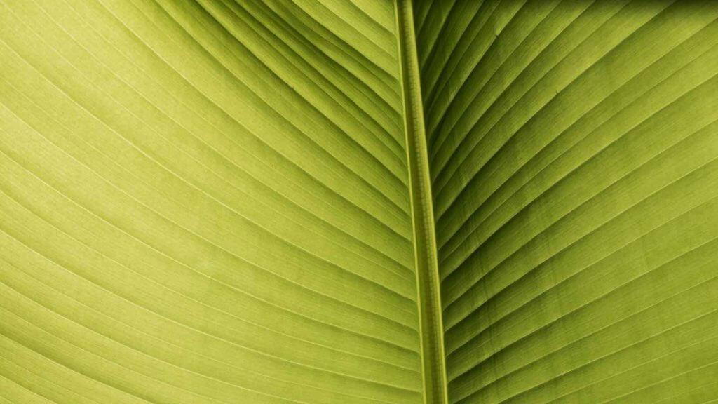 Palmblatt im Gegenlicht mit Softproof optimiert