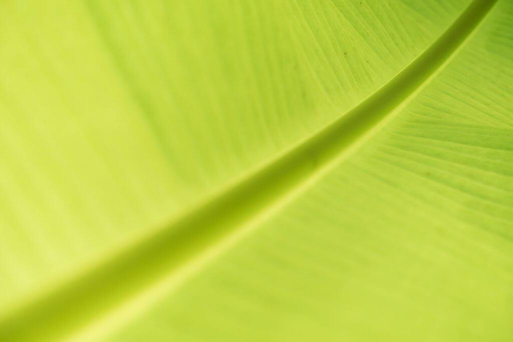 Palmblatt mit geringer Schärfentiefe