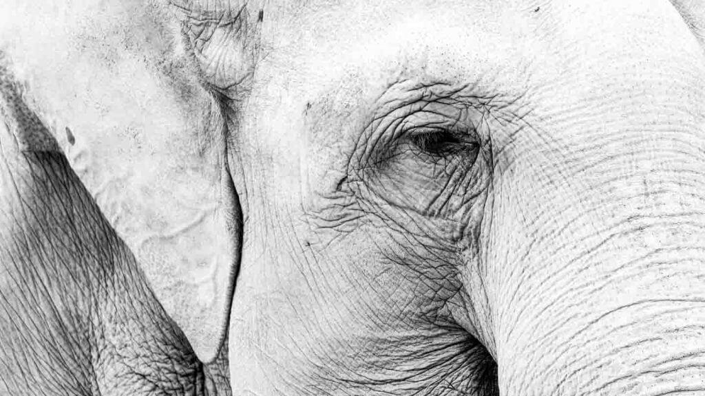 Brennweitenverlängerung Elefant ganz nah