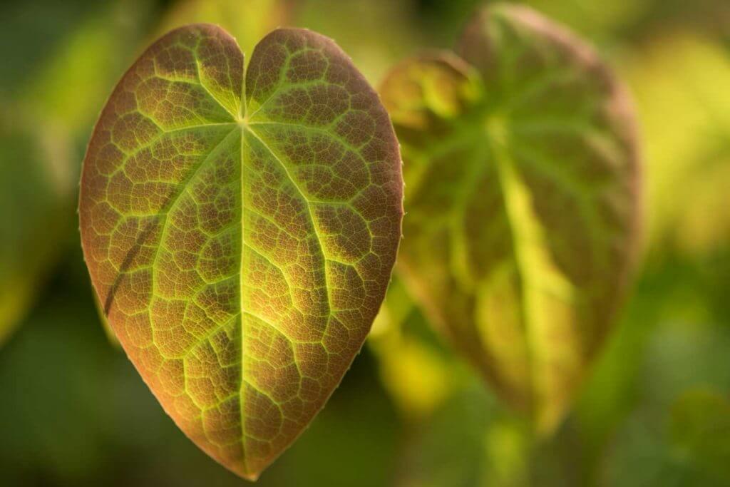 Schärfe und Unschärfe Blätter im Gegenlicht