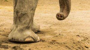 Im Elefantenhaus - Farben optimiert