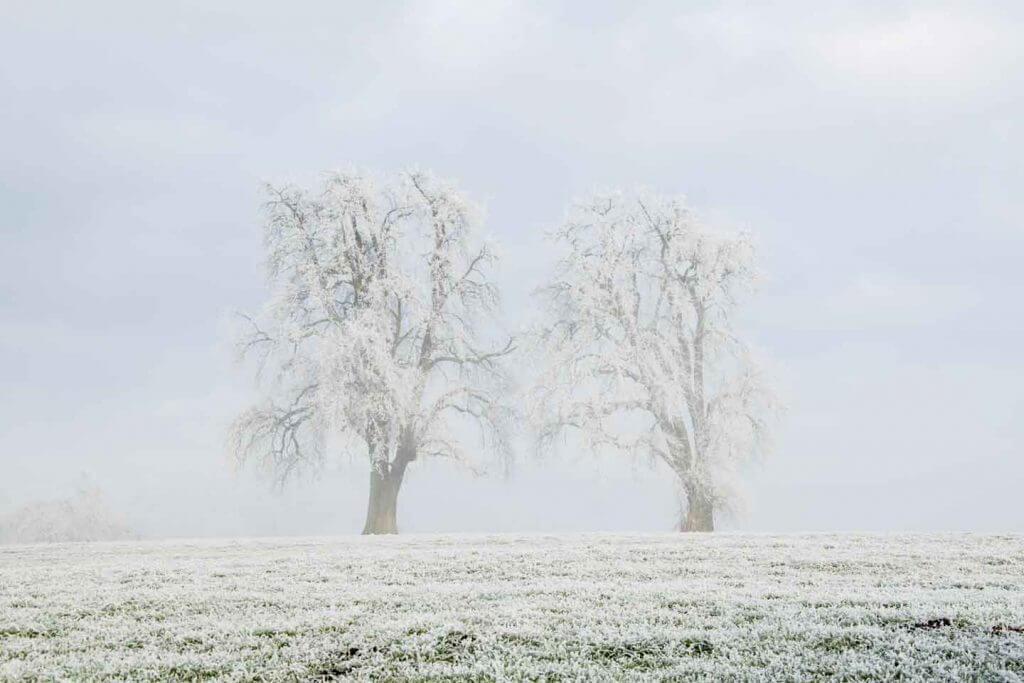 Naturfotografie - Nebelstimmung