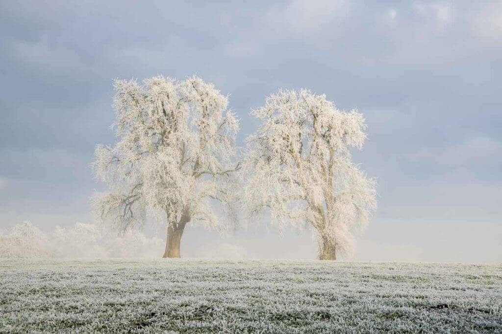 Naturfotografie - Winterstimmung