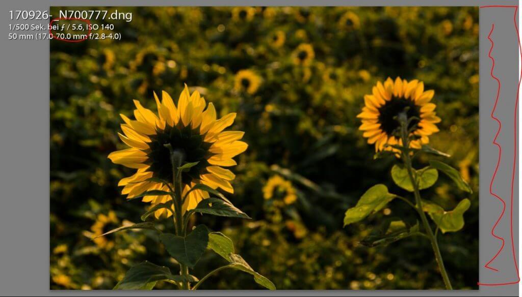 Fotocoaching Beispiel Sonnenblume