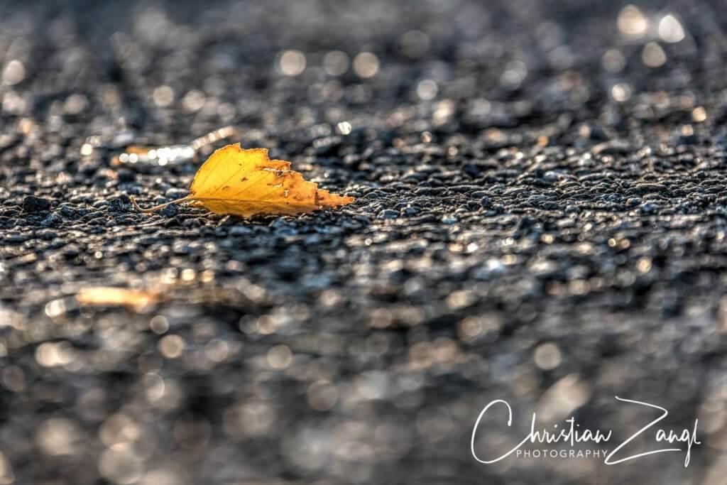 Herbstblatt im der Morgensonne PhotomatixPro
