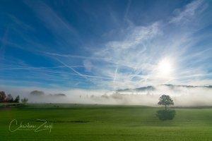 Nebelbilder im Gegenlicht