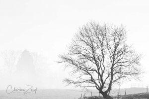 Nebelbilder mit Winterbaum