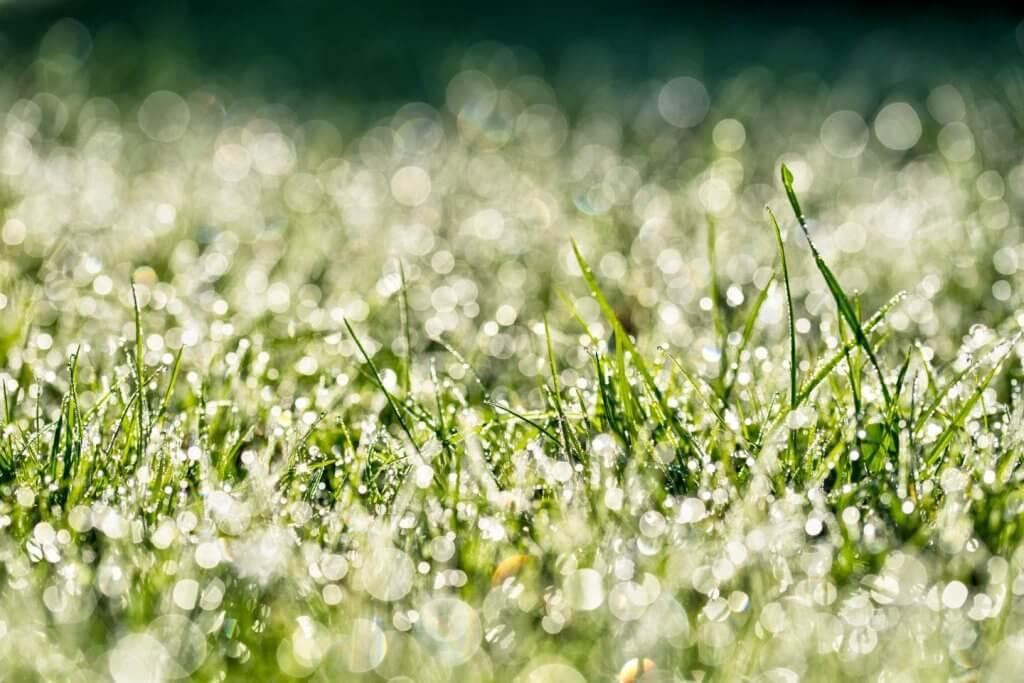 taunasses Grass - gegen das Licht fotografieren