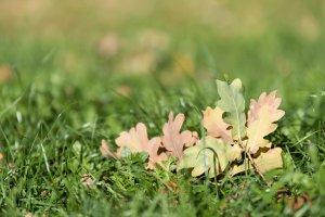 Herbstblätter mit Sonne im Ruecken