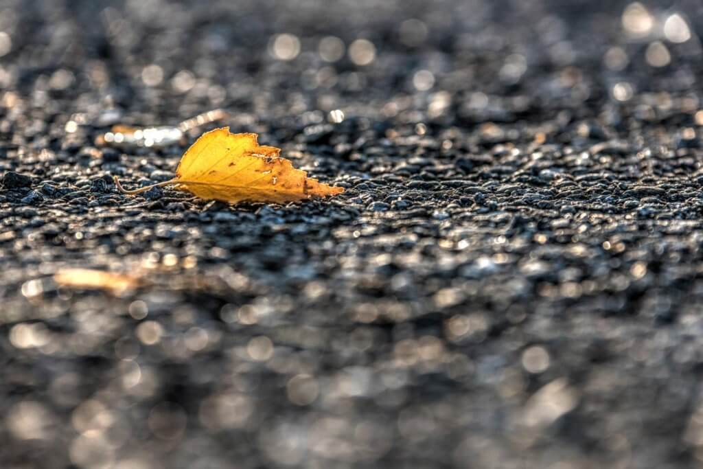 Herbstblatt gegen das Licht fotografieren