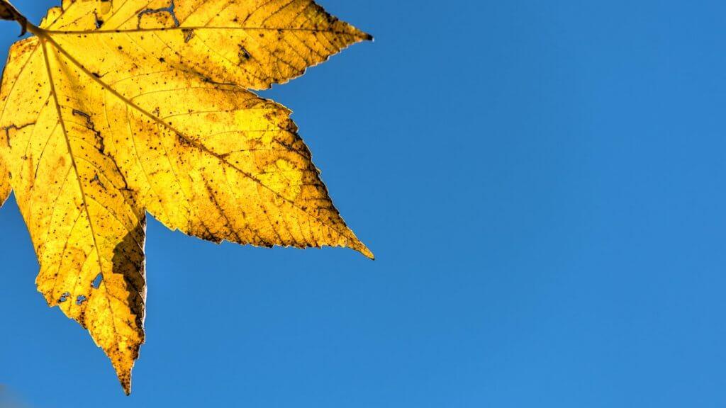 Herbstblatt vor tiefblauem Himmel