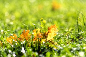 gegen das Licht fotografieren Herbstblätter