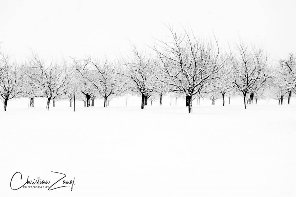 Winterliche Obstbaumplantage in Mörschwil