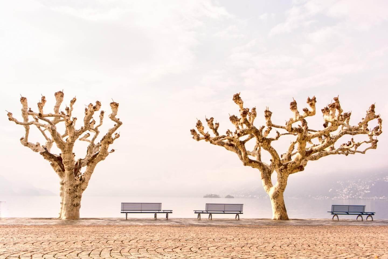 Bäume fotografieren