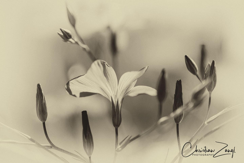 Blumen und Blüten Retrofotografie