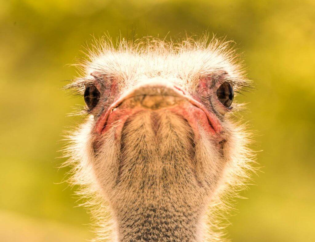 Face to Face - Fotografieren im Walter Zoo Gossau